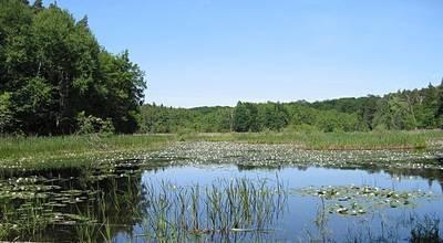 Mehr zu UNESCO Biosphärenreservat Schorfheide-Chorin