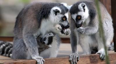 Mehr zu Tierpark und Zooschule Angermünde